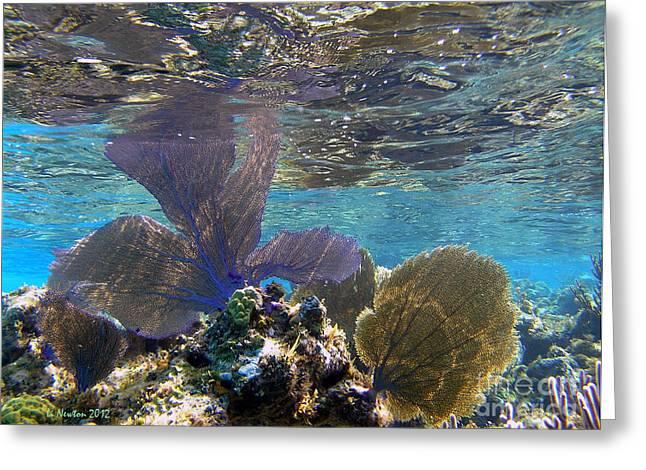 Undersea Photography Greeting Cards - Fan Fare Greeting Card by Li Newton