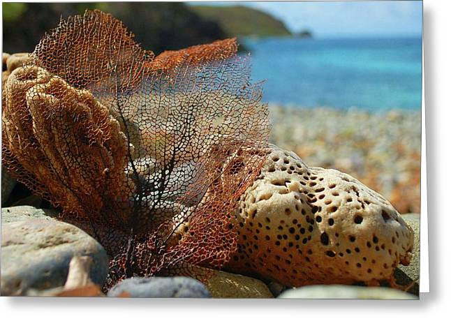 Crimson Tide Greeting Cards - Fan Sponge and Coral Greeting Card by Michael Thomas
