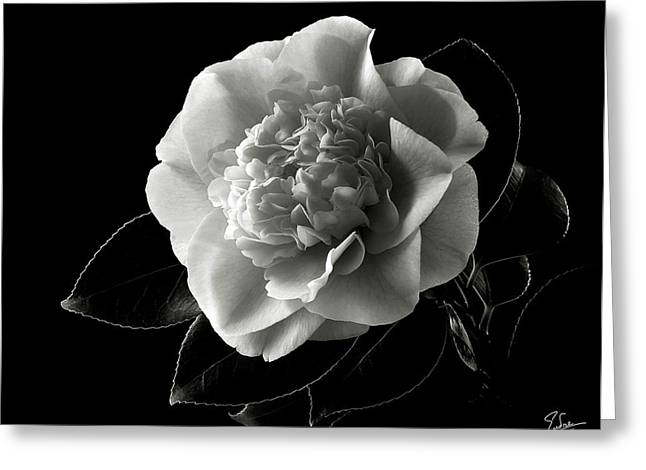 Flower Photos Greeting Cards - Fancy Camellia in Black and White Greeting Card by Endre Balogh