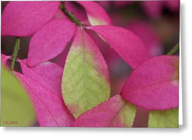 Green Foliage Greeting Cards - Fancy Fall Greeting Card by Elizabeth Richardson