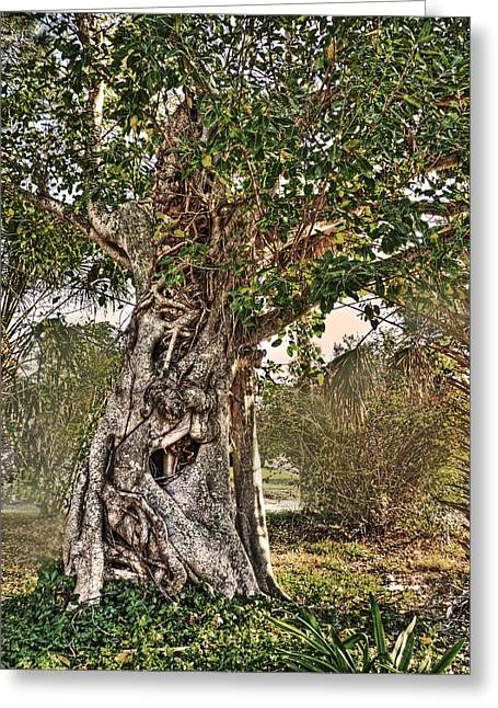 Ent Photographs Greeting Cards - Fangorn Greeting Card by William Fields