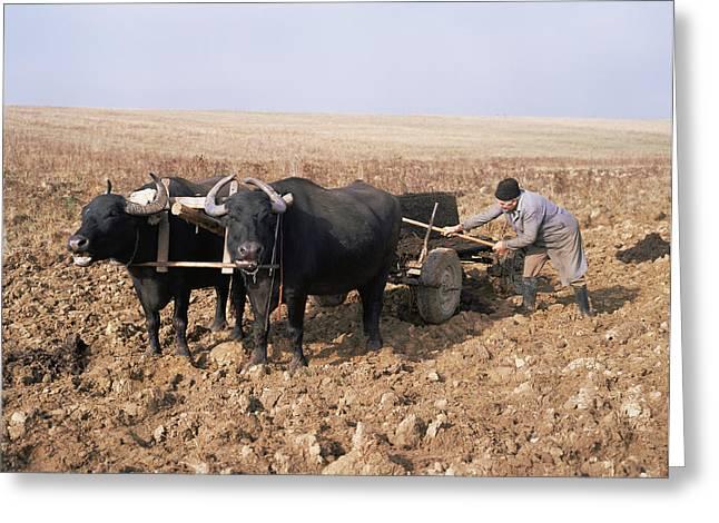 Cart Driving Greeting Cards - Farmer Fertilising A Field Greeting Card by Bjorn Svensson