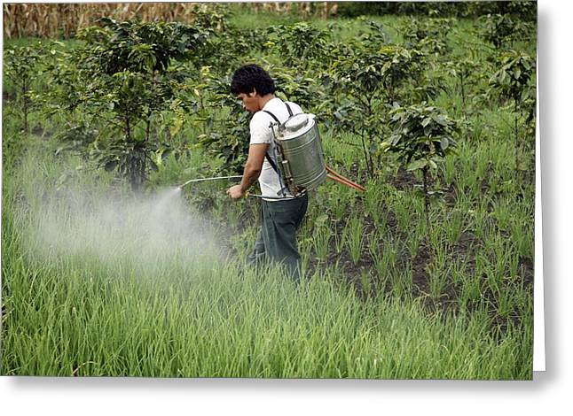 Farmers Field Greeting Cards - Farmers Spraying Pesticide On Rice Paddy Greeting Card by Bjorn Svensson