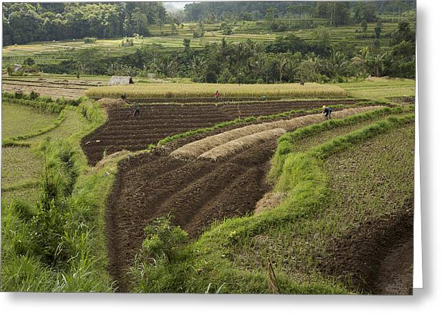 Obscure Greeting Cards - Farmers Working In Their Terraced Greeting Card by Tim Laman