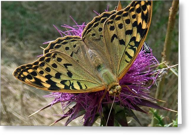 Insect Butterflies Of Lesvos Greeting Cards - Fashion Show Greeting Card by Eric Kempson