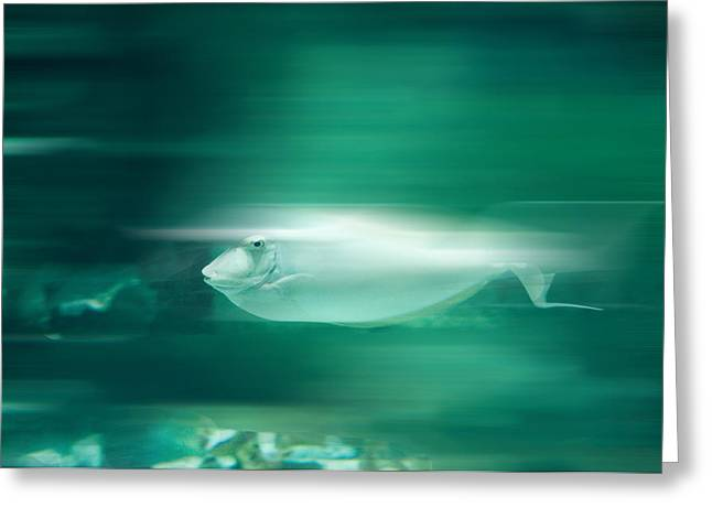 In Focus Greeting Cards - Fast Fish Greeting Card by John Kain