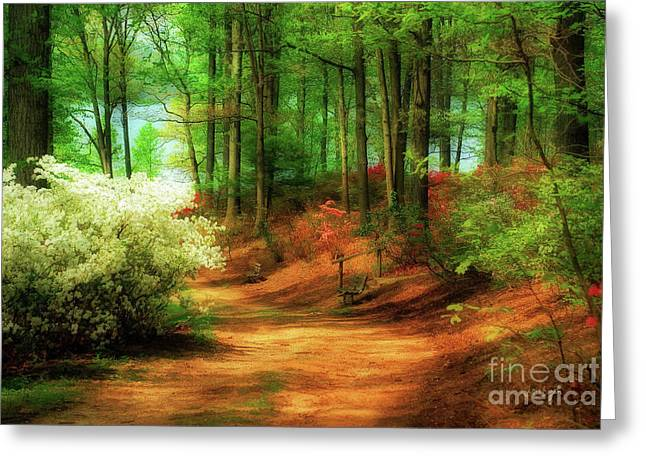Lois Bryan Greeting Cards - Favorite Path Greeting Card by Lois Bryan