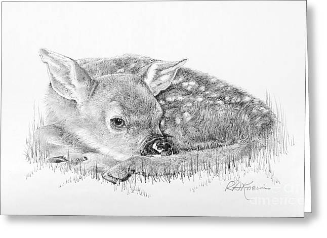 Kaelin Drawings Greeting Cards - Fawn in the Grass Greeting Card by Roy Kaelin