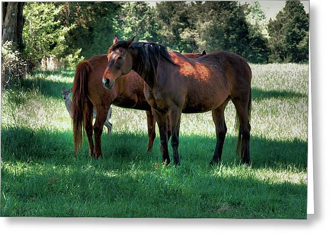 Equine Greeting Cards - Fawn with Horses  -  c0315i Greeting Card by Paul Lyndon Phillips