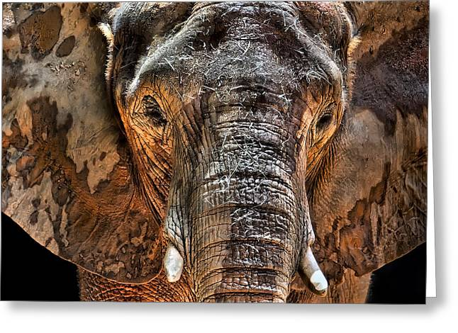 Elephant Photographs Greeting Cards - Fearless Greeting Card by Janet Fikar