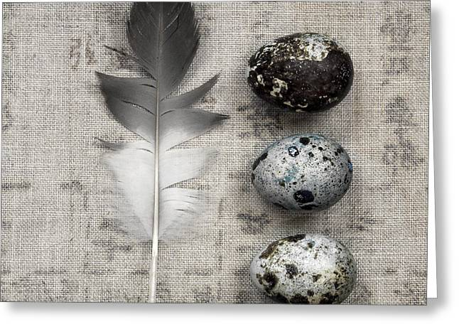 Feather And Three Eggs Greeting Card by Carol Leigh