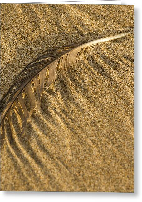 Jean Noren Greeting Cards - Feather Drag Greeting Card by Jean Noren