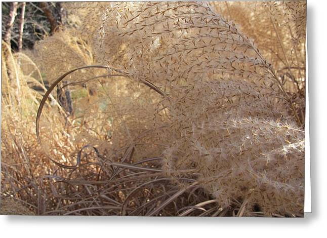 Nature Pyrography Greeting Cards - Feather Grass Greeting Card by Arlene Carmel