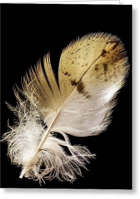 Jean Noren Greeting Cards - Feather Greeting Card by Jean Noren