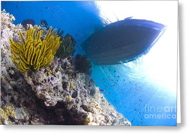 Ocean Photography Greeting Cards - Feather Stars With A Boat Greeting Card by Steve Jones