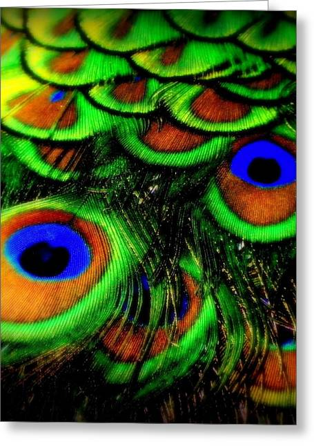 Blue And Green Greeting Cards - Feathers Greeting Card by Karen Wiles