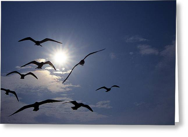 Photos Of Birds Greeting Cards - Feeding Frenzy Greeting Card by Skip Willits