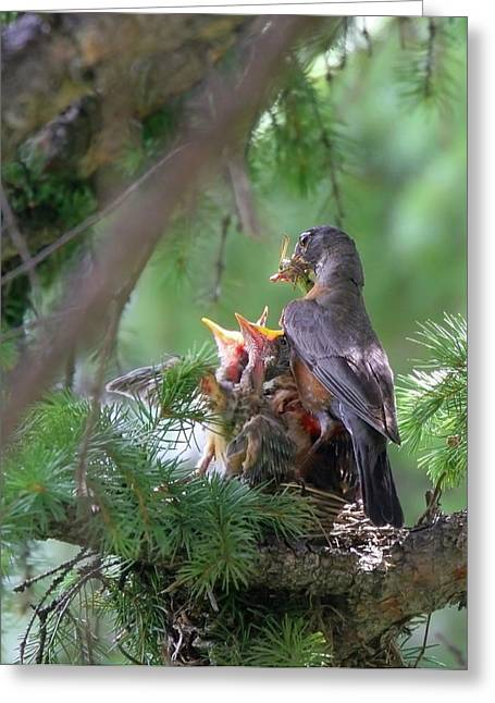 Hungry Chicks Greeting Cards - Feeding The Babies Greeting Card by Crystal Garner