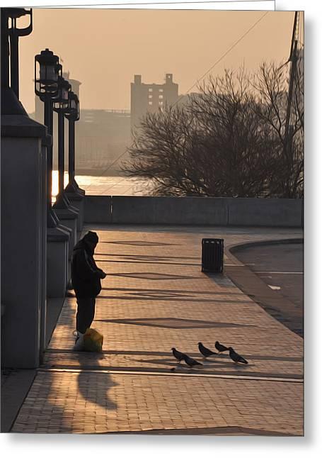 Feeding Birds Greeting Cards - Feeding the Pigeons at Dawn Greeting Card by Bill Cannon