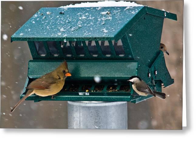 Feeding Birds Greeting Cards - Feeding Time at the Bird Trough Greeting Card by Douglas Barnett