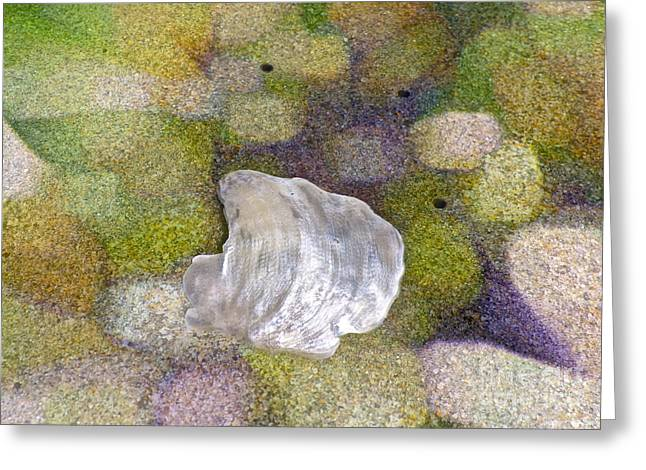 Shell Collection Digital Art Greeting Cards - Feeling Encompassed Greeting Card by Gwyn Newcombe