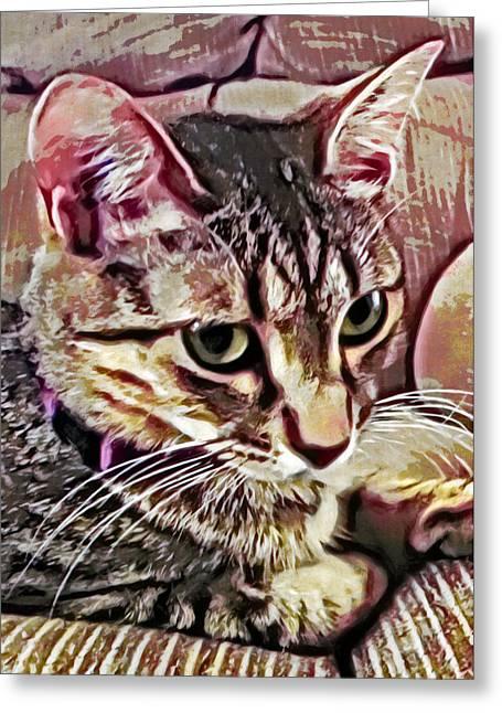Grettings Greeting Cards - Feline Fancy Greeting Card by David G Paul