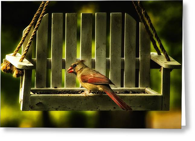 Female Northern Cardinal Greeting Cards - Female Cardinal in Evening Light Greeting Card by Bill Tiepelman