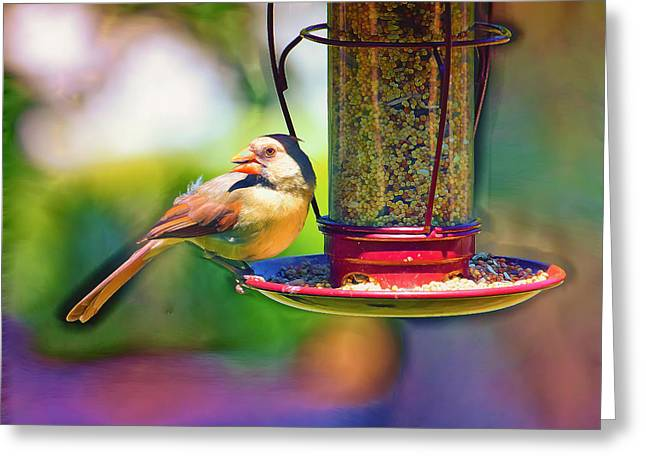 Bird-feeder Greeting Cards - Female Cardinal Pastelation Greeting Card by Bill Tiepelman