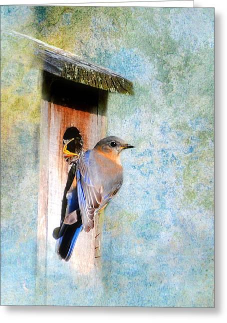 Female Eastern Bluebird At Nesting Box Greeting Card by Jai Johnson
