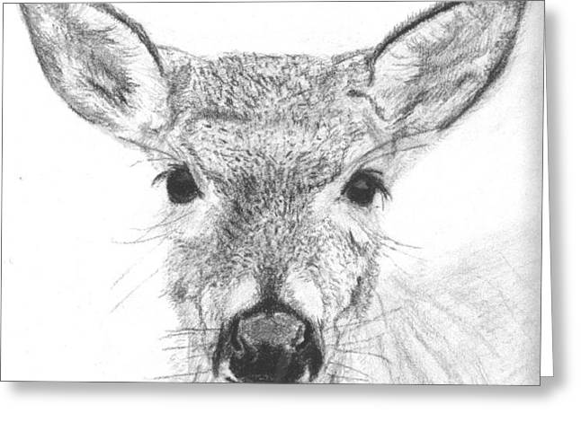 Female White-tailed Deer Greeting Card by Marqueta Graham
