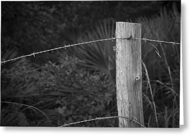 Wire Tree Greeting Cards - Fence Greeting Card by Laurie Hasan