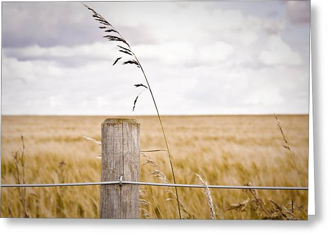 Border Photographs Greeting Cards - Fence post Greeting Card by Tom Gowanlock