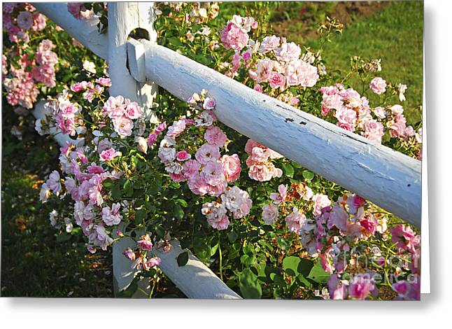 Painted Wood Greeting Cards - Fence with pink roses Greeting Card by Elena Elisseeva