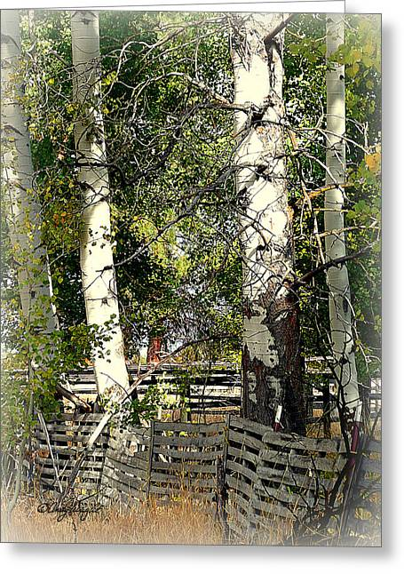 Fenced Aspen Greeting Card by Cindy Wright