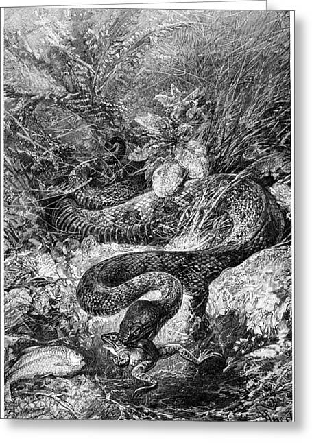 Deadliest Catch Greeting Cards - Fer-de-lance Snake, 19th Century Greeting Card by