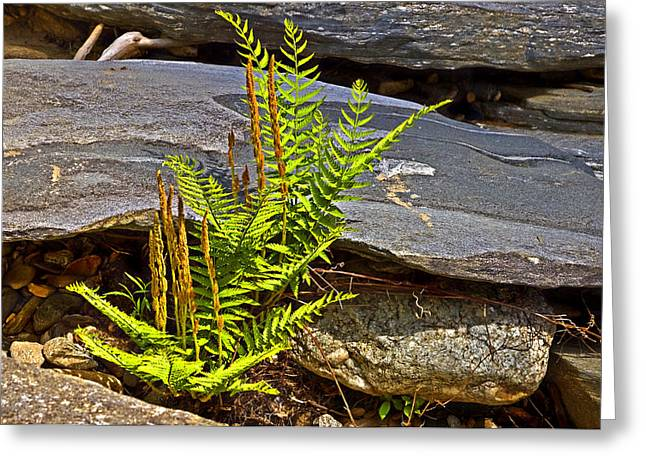 Growing From Rock Greeting Cards - Fern and Rocks Greeting Card by Susan Leggett