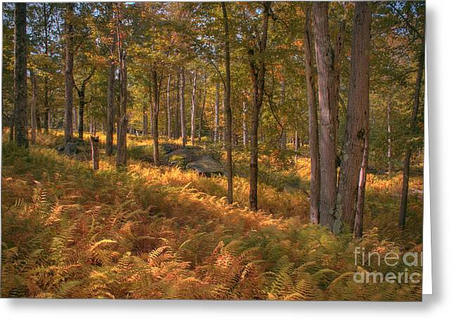 Tonemapping Greeting Cards - Fern Covered Clearing Greeting Card by Aaron Campbell