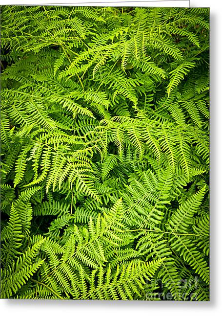 Fern Greeting Cards - Fern Greeting Card by Elena Elisseeva