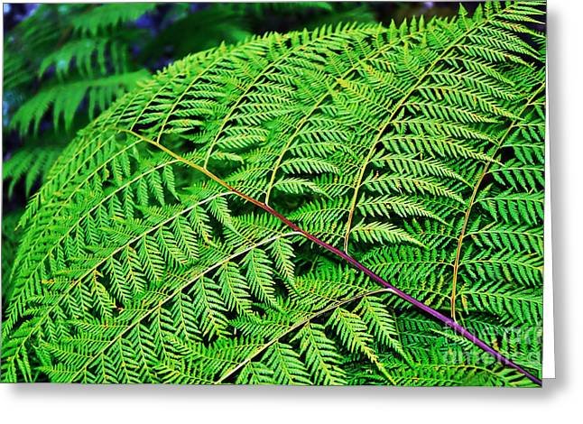 Flora Photography Greeting Cards - Fern Frond Greeting Card by Kaye Menner