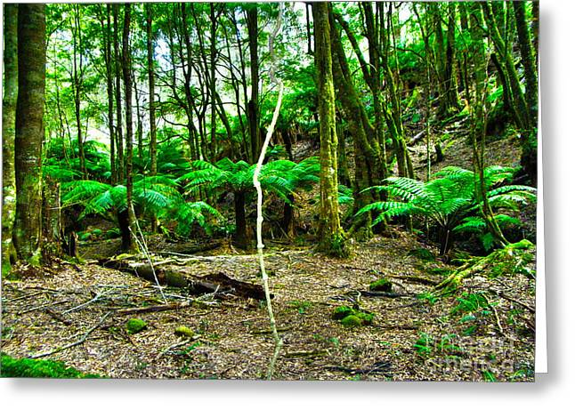 Joanne Kocwin Photographs Greeting Cards - Fern Grove Greeting Card by Joanne Kocwin