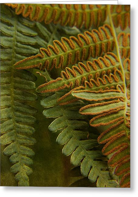 Spores Greeting Cards - Fern in My Garden Greeting Card by Bonnie Bruno
