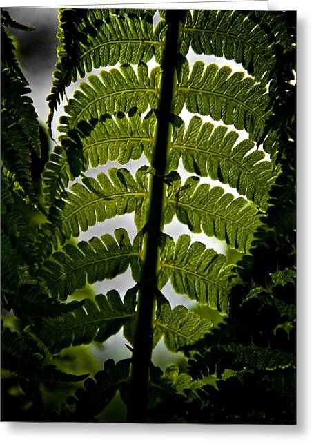 Forest Floor Greeting Cards - Fern Greeting Card by Odd Jeppesen
