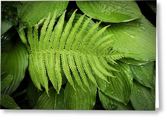 Fern On Top Greeting Card by Nafets Nuarb
