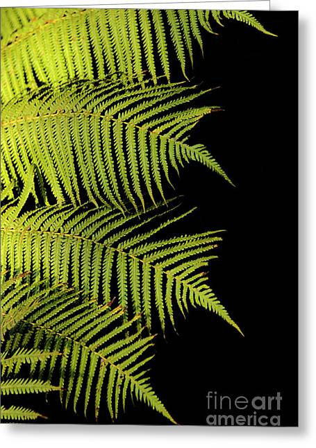 Surfing Photos Greeting Cards - Fern Palm Greeting Card by Bob Christopher