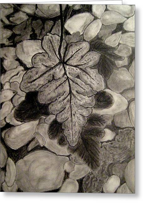 Geographic Mixed Media Greeting Cards - Ferns and Pebbles Greeting Card by Sowjanya Sreeram