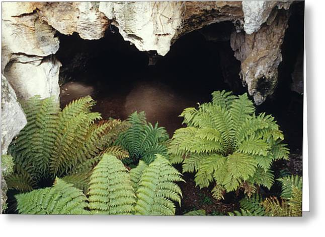 Ferns Growing In The Gaping Mouth Greeting Card by Jason Edwards