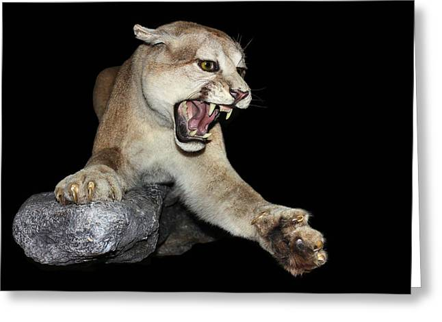 Sharp Claws Greeting Cards - Ferocious Puma Greeting Card by Kristin Elmquist