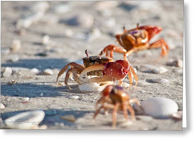 Fiddler Crab Greeting Cards - Fiddler Crab Conga Line Greeting Card by Christine Stonebridge