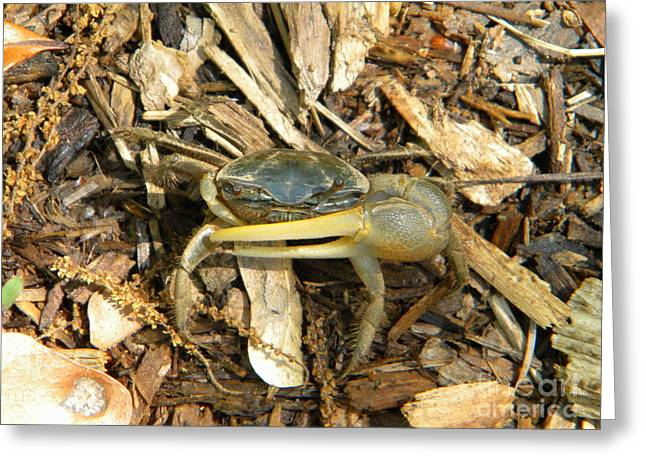 Fiddler Crab Greeting Cards - Fiddler on the Ground Greeting Card by JoAnn Wheeler
