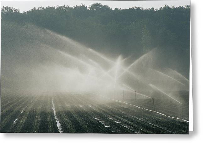Farmers And Farming Greeting Cards - Field Irrigation, Provence Region Greeting Card by Nicole Duplaix